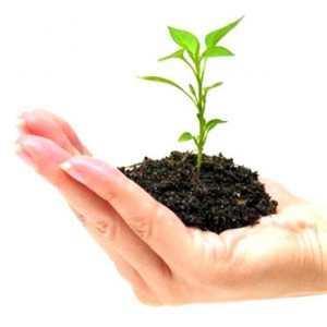 Aprire un'attività e vederla crescere